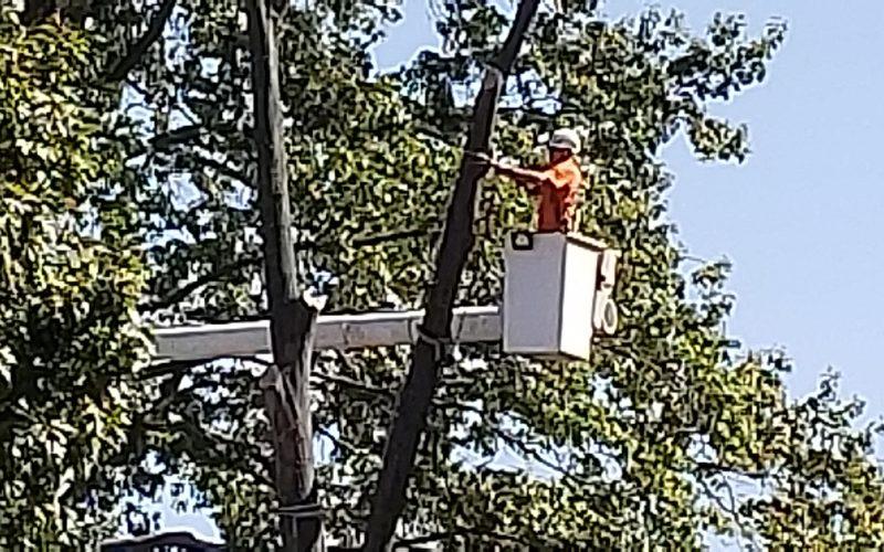 Hiring a Tree Service: Hot Summer Tips